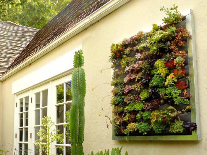 Интересное решение: как вырастить вертикальный сад