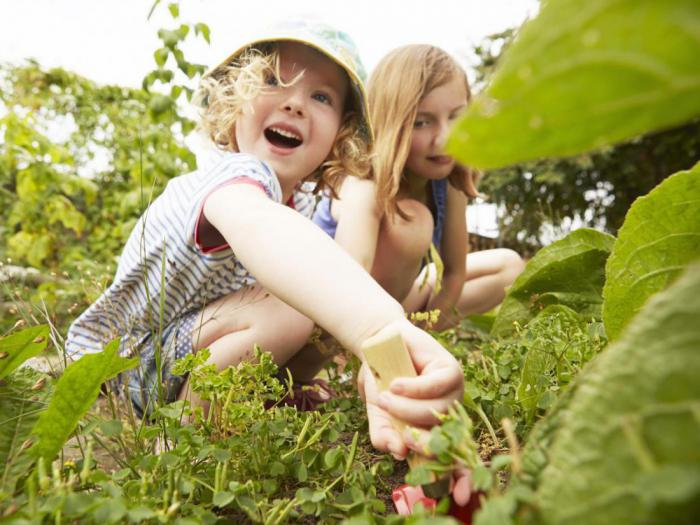 Исследования показывают: красивый сад может спасти вашу жизнь