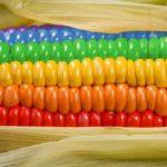 Можно ли кушать кукурузу при беременности?
