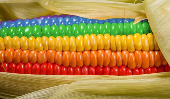 Можно ли кушать кукурузу при беременности