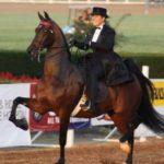 Американская верховая лошадь. История породы
