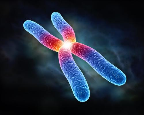 Что такое хромосома? Набор хромосом. Пара хромосом