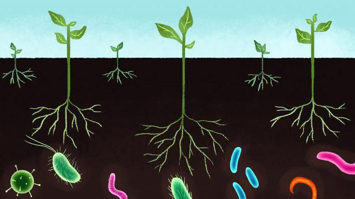 Эдафический фактор и его влияние на живые организмы