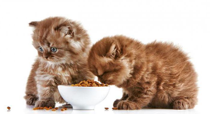 1st choice (корм для кошек): состав, преимущества, отзывы