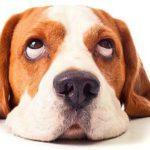 Что давать собаке при поносе: причины и лечение