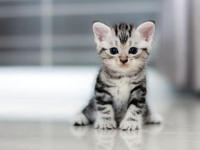 Можно ли размачивать сухой корм для кошек: мнение ветеринаров