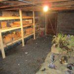 Хранение свеклы в погребе, или Как обеспечить себя свежими овощами на весь год