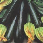 Кабачок черный красавец: особенности сорта и правила выращивания