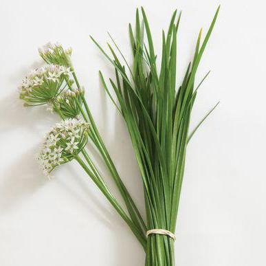 Как вырастить лук душистый из семян?