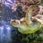 Каким должен быть островок для черепах?