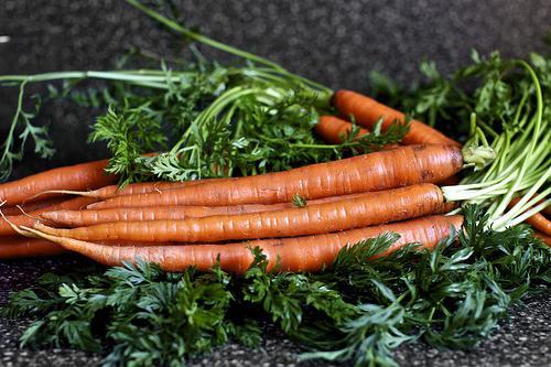 Морковь Шантане. Описание сорта. Выращивание моркови в домашних условиях