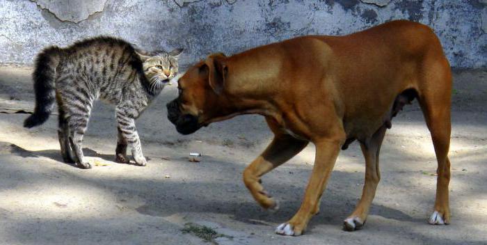 Можно ли кормить кошку собачьим кормом? Какой корм для кошек самый лучший
