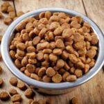 Можно ли размачивать сухой корм для собак водой?
