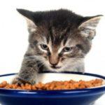 Можно ли взрослым кошкам корм для котят? Отличия питания