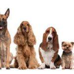 Норма кормления собак сухим кормом на день