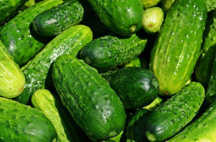 Подкормка растений дрожжами: лучшие рецепты, эффективные способы и отзывы