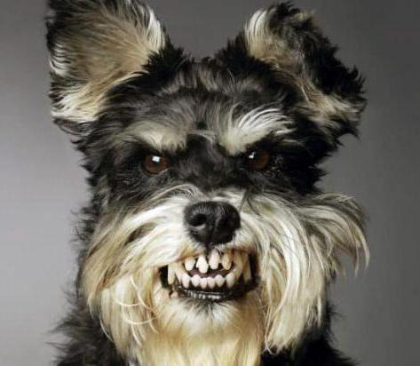 Язык собак. Переводчик на собачий язык. Понимают ли собаки человеческую речь