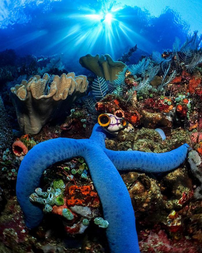 Названы победители конкурса подводной фотографии 2016 года