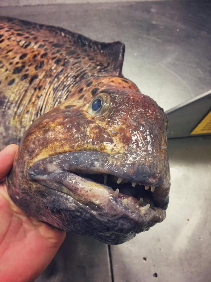 Рыбак из Мурманска собрал настоящую коллекцию глубоководных монстров