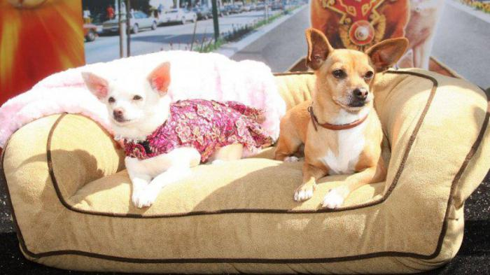 Знаменитые собаки, снявшиеся в кино: вся правда, о которой не говорят