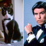 15 кошек, которые выглядят как популярные вымышленные персонажи