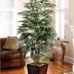 5 лучших комнатных растений, которые очищают воздух