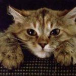 Думаете, ваш кот по вам соскучился? Возможно, он просто разозлился