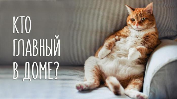 Как кот может разрушить вашу жизнь: 8 способов