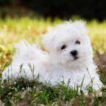 Как выбрать четвероногого друга: 11 лучших пород собак