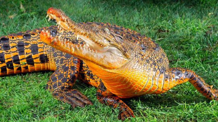 7 обычных животных с необычным окрасом