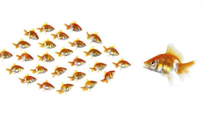 Чем на самом деле нужно кормить золотую рыбку?