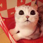 Знакомьтесь с Ханой — кошечкой из Японии, покорившей сердца тысяч людей