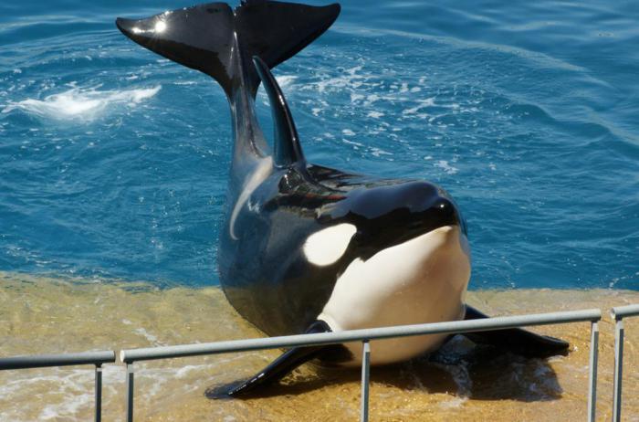 Франция подписала закон, запрещающий разведение китов и дельфинов в неволе