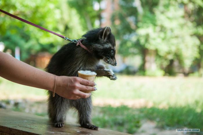 Готовы ли вы завести домашнее животное?