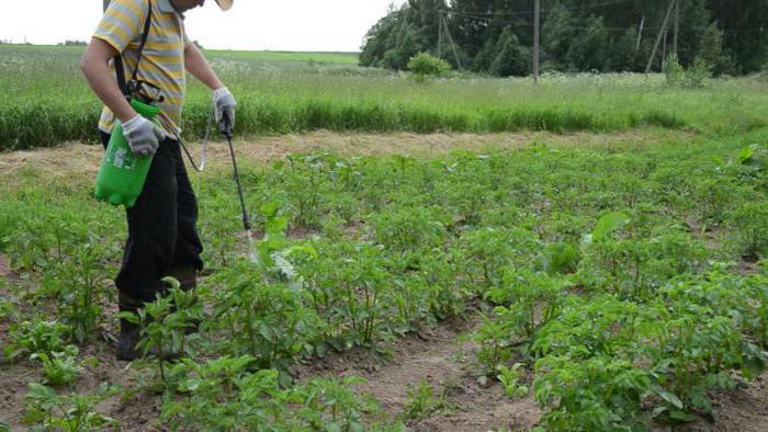 Как бороться с фитофторой на картофеле? Препараты от фитофторы
