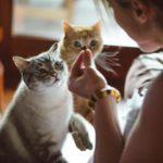 Корм для кошек Каждый день: отзывы покупателей