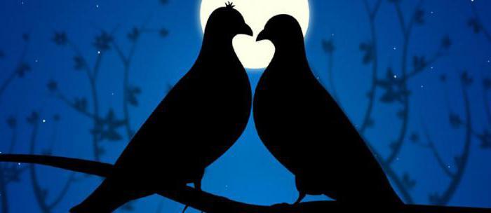 Красивые статусы про любовь со смыслом. Статусы в ВК про любовь к парню