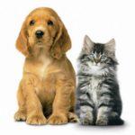 Можно ли собаке кошачий сухой корм: особенности, состав и последствия