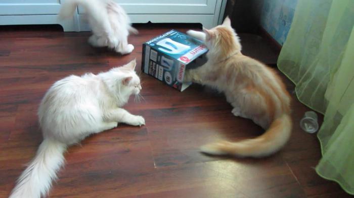 Почему кошки ищут для сна тесные коробки и сумки?