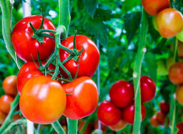 Рецепт маринада для помидор на 1 литр воды