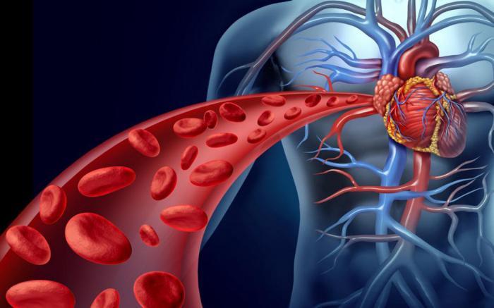 Факты о человеческой крови, которых вы, возможно, не знали