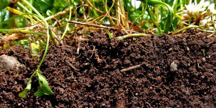 Как сельское хозяйство может спасти планету?