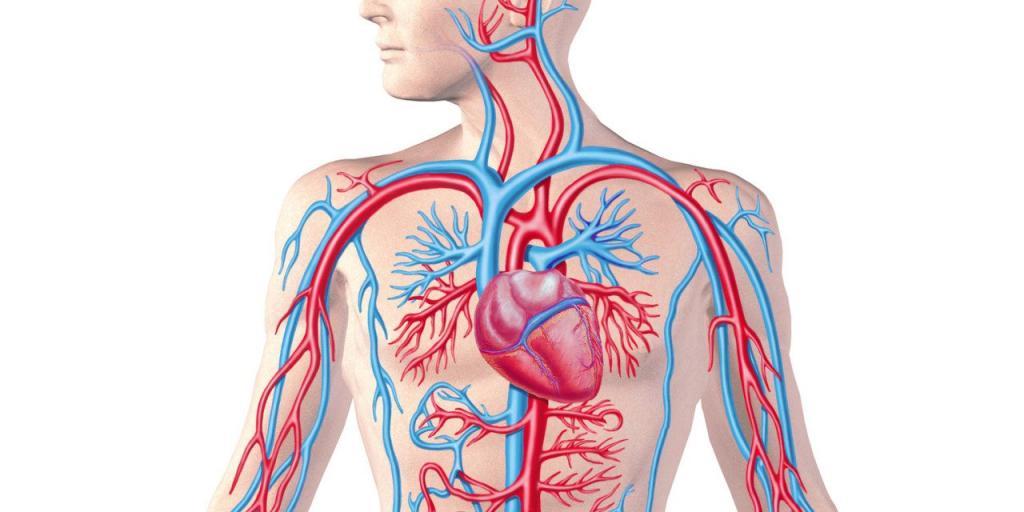 средний показатель артериального давления