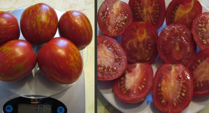 Семенные камеры томата