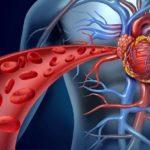 Вены сердца: описание, виды ветвления, название и строение