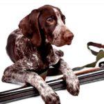 Дрессировка охотничьих собак: особенности обучения и воспитания, советы кинологов