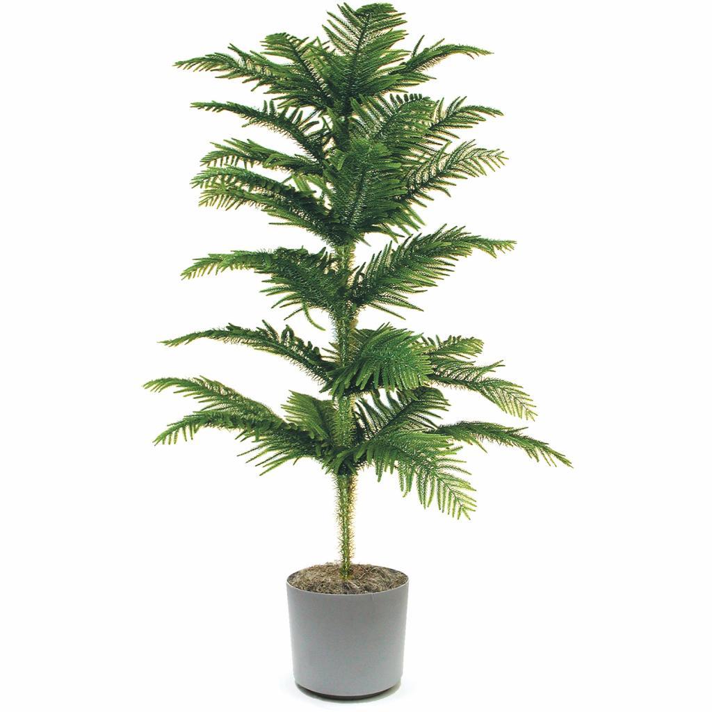 колючие комнатные растения