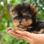 Имена для собак-девочек маленьких пород: перечень, порядок выбора, советы кинологов