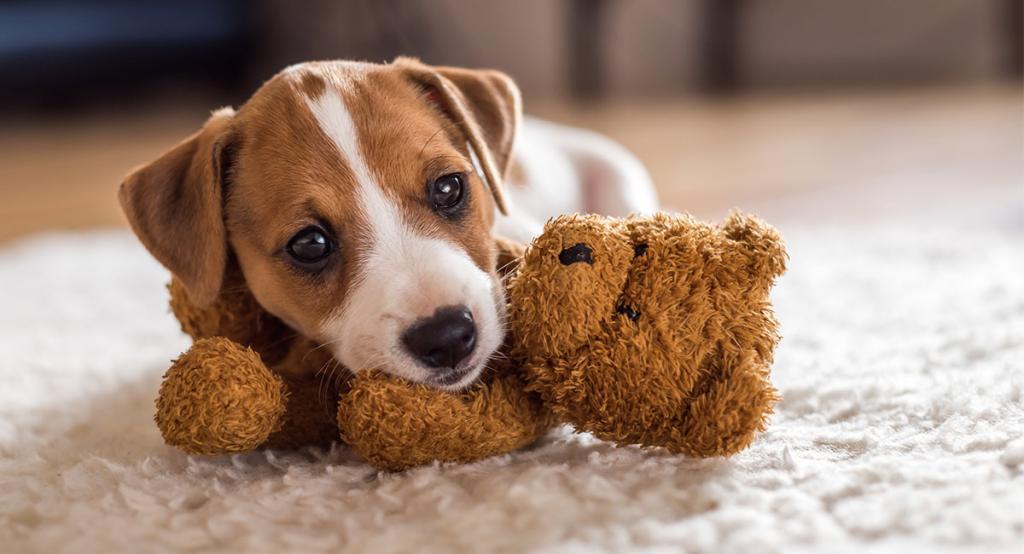 Имена для маленьких собачек