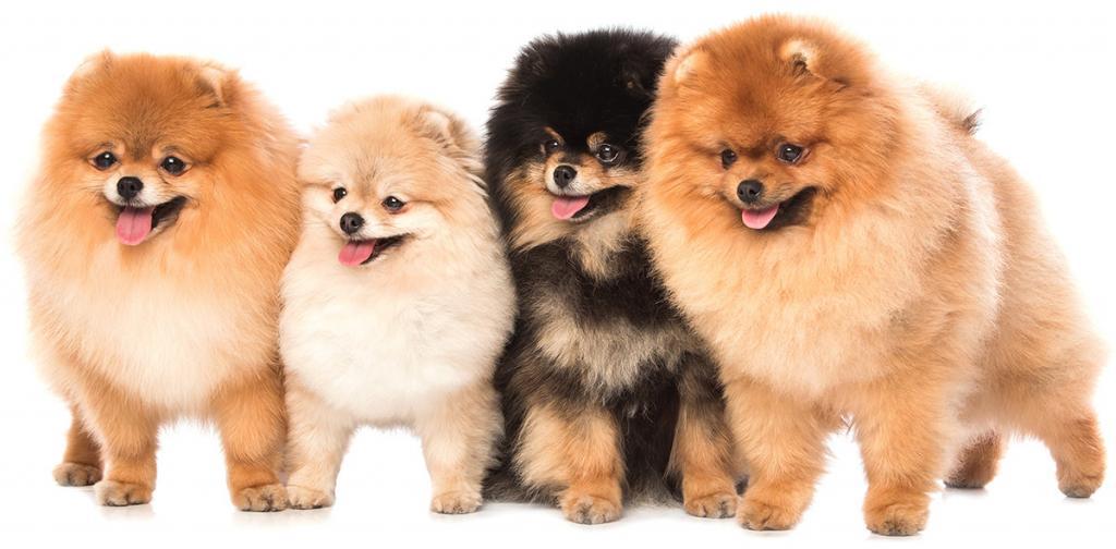 Имена маленькой породы собачки